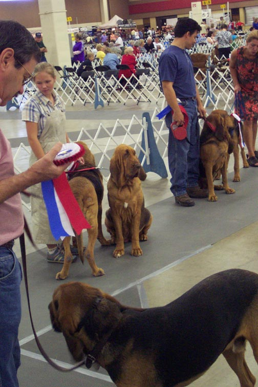 Parade-of-Hounds-Pic-1